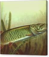 Musky Spinnerbait Canvas Print