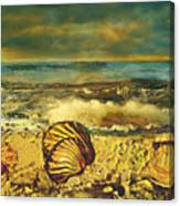 Mussels On The Beach Canvas Print