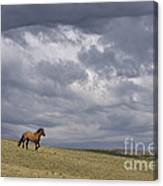 Mustang And Stormy Sky Canvas Print