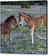 Mustang Foals Canvas Print