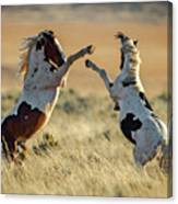 Mustang Rivalry Canvas Print