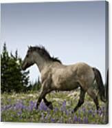 Mustang Running 2 Canvas Print