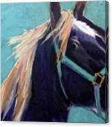 Mustang Sally Canvas Print