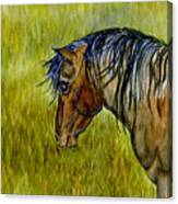 Mustang Stallion Canvas Print
