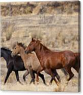 Mustang Trio Canvas Print
