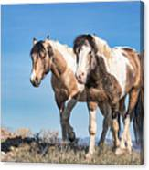 Mustang Twin Stallions Canvas Print