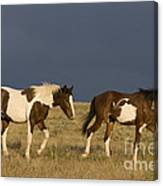 Mustangs In Nevada Canvas Print