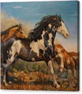 Mustangs On The Run Canvas Print