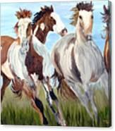 Mustangs Running Free Canvas Print