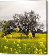 Mustard And Oaks Canvas Print