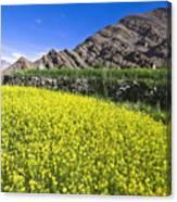 Mustard Field, Hemis, 2007 Canvas Print