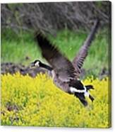 Mustard Flight Canvas Print