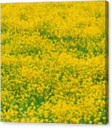 Mustard Flowers Canvas Print