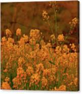 Mustard Garden Canvas Print