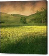 Mustard Grass Canvas Print