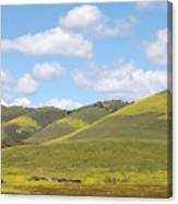 Mustard On Nipomo Hills Canvas Print
