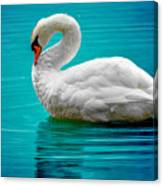 Mute Swan 4 Canvas Print