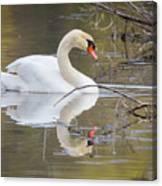 Mute Swan Glide II Canvas Print