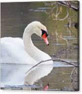 Mute Swan I Canvas Print