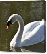 Mute Swan On Rolleston Pond Canvas Print