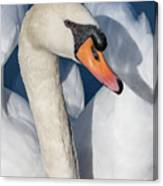 Mute Swan Portrait Canvas Print