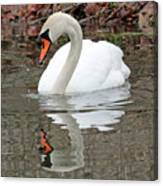 Mute Swan Reflecting Canvas Print