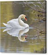Mute Swan Reflection I Canvas Print
