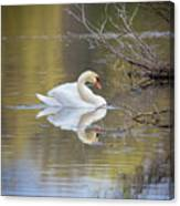 Mute Swan Reflection Canvas Print