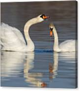 Mute Swans Drinking Canvas Print