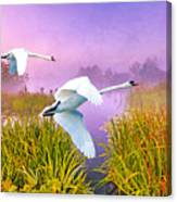 Mute Swans Over Marshes Canvas Print