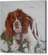 Muttley-the Best Springer Spaniel Canvas Print