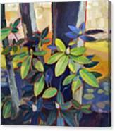 My Back Yard Canvas Print