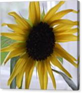 My Beautiful Sunflower Canvas Print