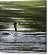 Cormorant - My Catch For The Day Canvas Print