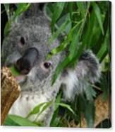My Eucalyptus Canvas Print