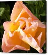 My Favorite Rose Canvas Print