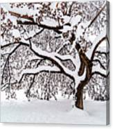 My Favorite Tree In The Snow Canvas Print