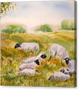 My Flock Of Sheep Canvas Print