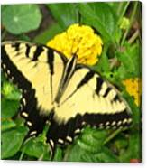 My Garden Visitor Canvas Print