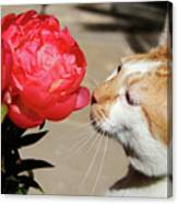 My Kitty In Love With A Peony Canvas Print