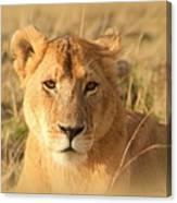 My Lion Eyes Canvas Print