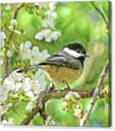 My Little Chickadee In The Cherry Tree Canvas Print