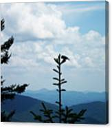 My Mountain Bird Canvas Print