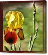 My Painted Iris Canvas Print