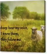 My Sheep Hear My Voice Canvas Print