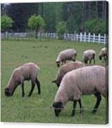 My Sheep Know My Voice Canvas Print