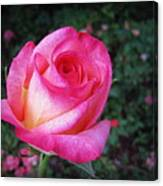 My Special Rose Canvas Print