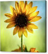 My Sunny Side  Canvas Print