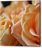 My Sweet Roses Canvas Print
