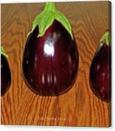 My Three Eggplant Fruits Canvas Print